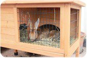 rabbit in small hutch