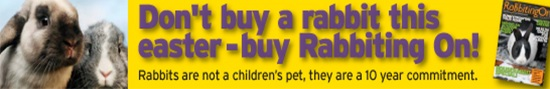Dont Buy a Rabbit this Easter - Buy Rabbiting On